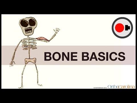 Bone Basics: How They Heal + How to Keep them Healthy