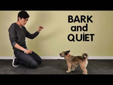 Teach Dog to Stop Barking