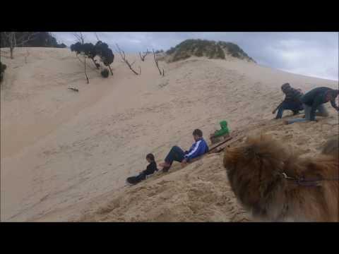 Henty Dune Sand tobogganing