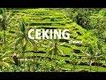 Download Lagu Wisata Paling Indah di Bali,Ceking Terrace | Alam Persawahan yang Menabjubkan Mp3 Free