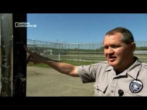 Cárceles: Bandas Carcelarias