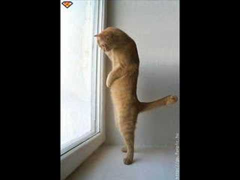 animali, compilation di foto divertentissime!