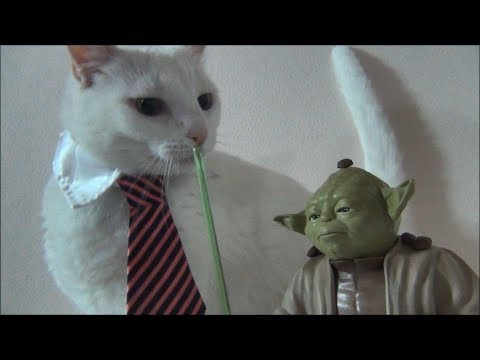 Cat using action figures as dishes