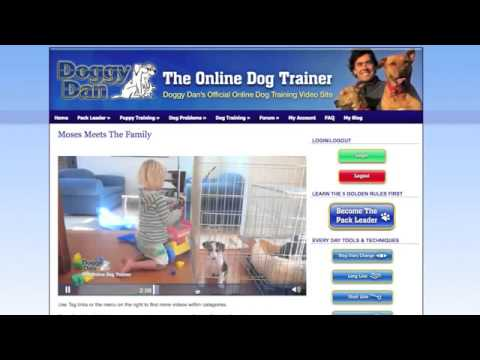 Dog Training | Dog & Puppy Obedience Training | Dog Grooming