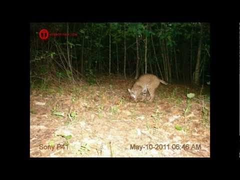 , title : 'Homebrew Trail Cam Photo Contest'