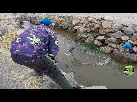 Pesca de Pejerrey - Como Pescara Pejerrey con Atarraya