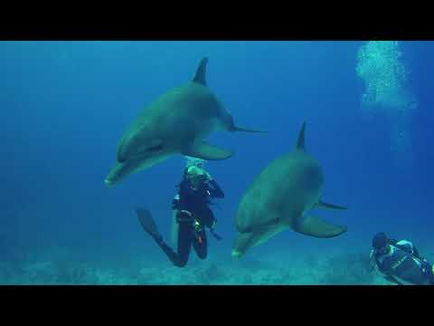 Dolphins in the House Reef