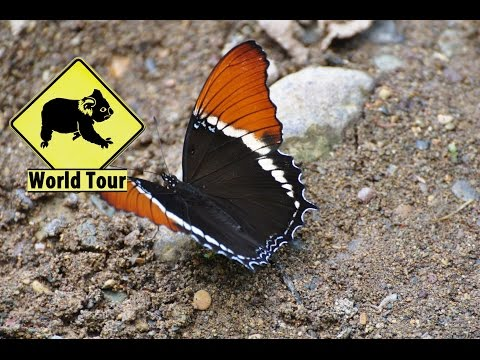 Voyage au Honduras, Juticalpa, parc el Boqueron (Travel Honduras) (around the world) video