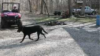 7. dragging a log with the polaris ranger 500