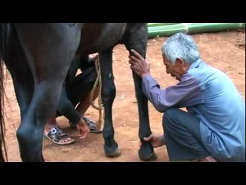 Kuda Renggong - Palias Laas ku Mangsa #1