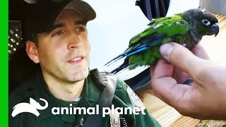 Escaped Exotic Bird Needs To Be Reunited With Its Owners | North Woods Law by Animal Planet