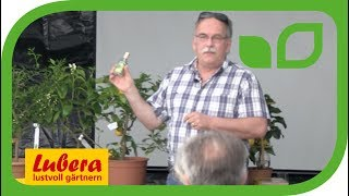 Geschichte der Citrus - Von Goethe, Bergamotte und 4711