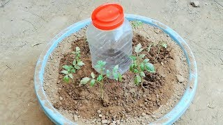 Video Plastic Bottle drip watering system simple and easy for plants using waste plastic bottle MP3, 3GP, MP4, WEBM, AVI, FLV Maret 2019