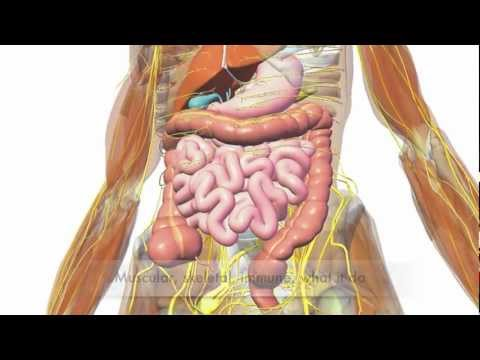So Many Systems - Human Body Systems Rap