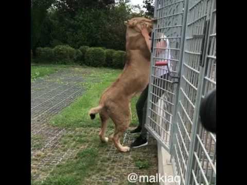 Lioness Malkia & Adelle Queen (видео)