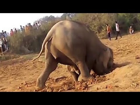Elephant Digs A Hole For 11 Hours, What She Pulls Out… OMG.