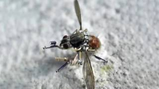 NANO SPY DRONE  Mosquito Drone from U S  Military