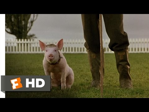 babe - Babe Movie Clip - watch all clips http://j.mp/x9mDEz click to subscribe http://j.mp/sNDUs5 Babe (Christine Cavanaugh) uses his manners and polite persuasion ...