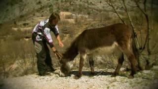Red Bull Donkey Cross Road Trip 2011