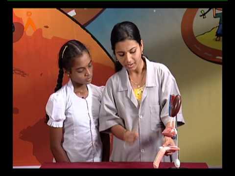 Video The Male uro-genital system (Kannada) download in MP3, 3GP, MP4, WEBM, AVI, FLV January 2017