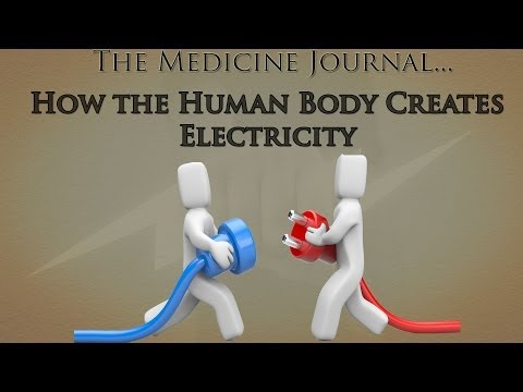 How Does The Human Body Create Electricity?
