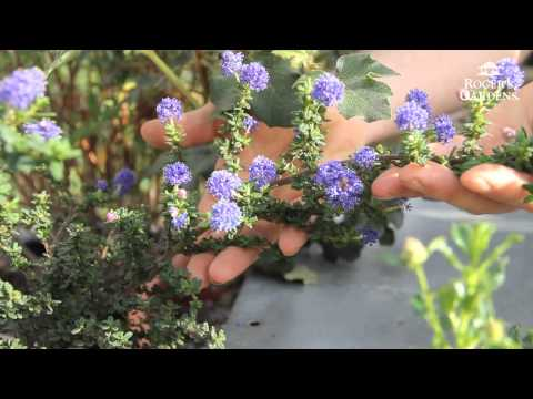 California Friendly Gardening Solutions: Gardening with Native Plants with James Maxwell