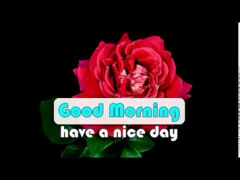 Good morning messages - blooming flowers video good morning message whatsapp