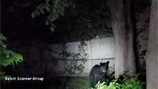 Beloit (WI) United States  City new picture : Black Bear in Beloit