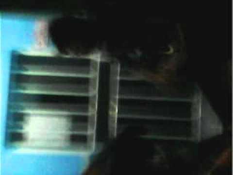 ptlzum jean vs bebado candido de abreu