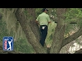 Pro Golfer Sergio Garcia Plays Ball Stuck On Tree