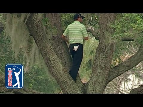 Golfboll som fastnat uppe i träd
