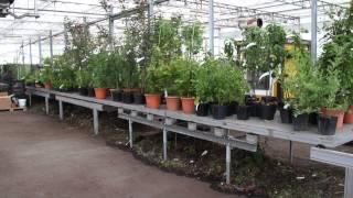 #381 Pflanzen für Irland