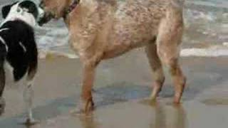 Redhead Australia  city photos gallery : A Dog Named Charlie - Redhead Beach NSW Australia 170508