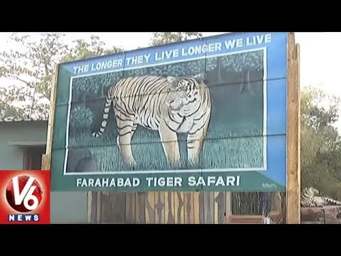 Tiger Census And Animal Counting Finished In Nallamala Forest | V6 News