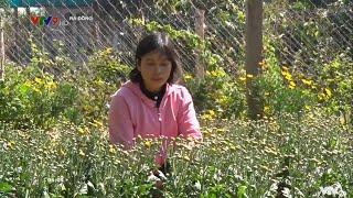 Xử lý hỗn hợp SEA trên đất trồng hoa