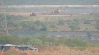 Wetland bird habitat of Thane creek being destroyed.