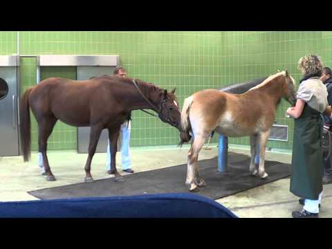 Quaterback - Wolkentanz - Donnerhall - Breeding Stallion - Top Fertility