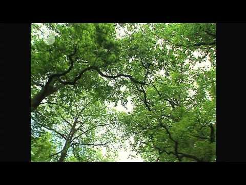 Tour im Eichenwald - Erforschen des Eichenwaldes (1/6)