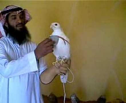 شوووف الطير ماشالله تبارك الرحمن