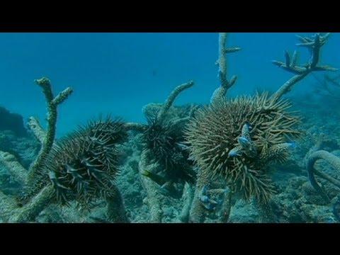 الإحتباس الحراري يقضي على الشعاب المرجانية في استراليا - فيديو
