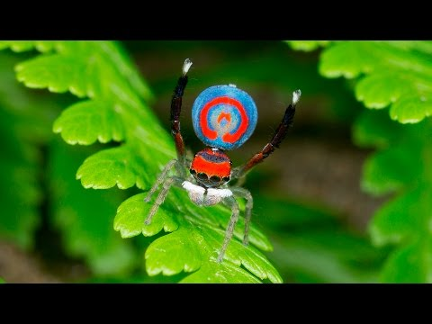 Descubren arañas que acechan