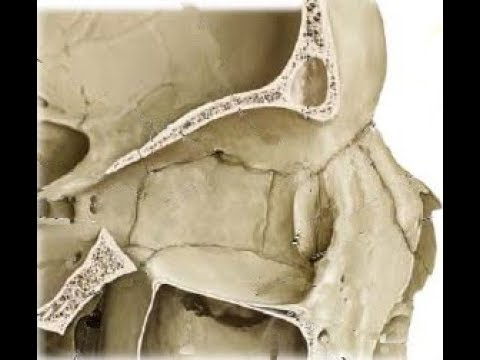 ETHMOID BONE - ADVANCED ANATOMY