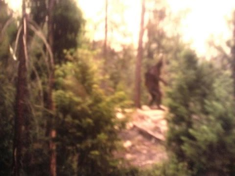 Mysterious Hairy Creature Believed to be Bigfoot Caught on Cam