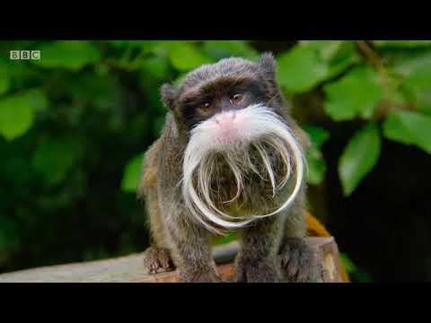 BBC The Zoo series 1 episode 1 -  The Big Bang