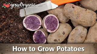 Planting & Growing Potatoes
