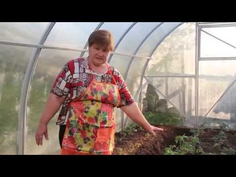 Подробности ухода за томатами в теплице