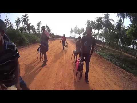 Video Kanni Dog Race download in MP3, 3GP, MP4, WEBM, AVI, FLV January 2017