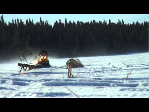 Winter Harvesting with Cree Hunter David Mianscum - Mistissini