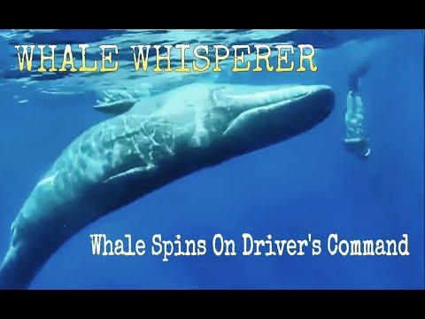 Így táncoltatja meg a bálnát ez a búvárkutató