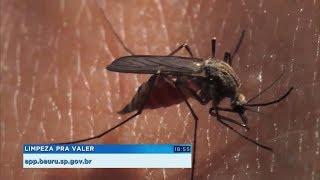 Epidemia de dengue em Bauru chega a 10 mortes e 4.875 casos